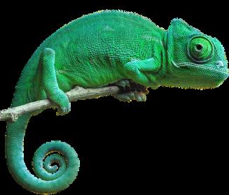 Chameleon PNG Pic - Chameleon PNG