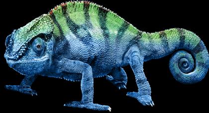 Chameleon PNG Transparent Image - Chameleon PNG