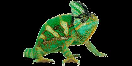 Chameleon PNG Transparent Picture - Chameleon PNG