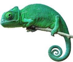 хамелеон png - Поиск в Google - Chameleon PNG