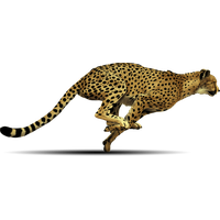 Cheetah PNG - 22547