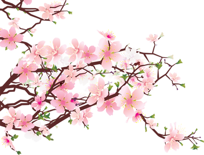 Background clipart cherry blossom #8 - Sakura Flower PNG HD - Cherry Blossom PNG HD