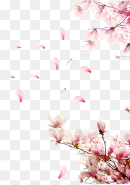 cherry tree branches, Cherry Tree Branches, Cherry Blossom Festival, Cherry  Blossoms PNG Image - Cherry Blossom PNG HD