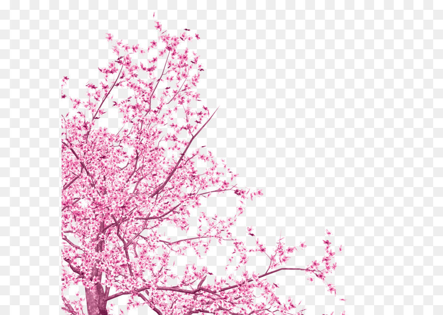 National Cherry Blossom Festival Tree - Pink flowers - Cherry Blossom PNG HD