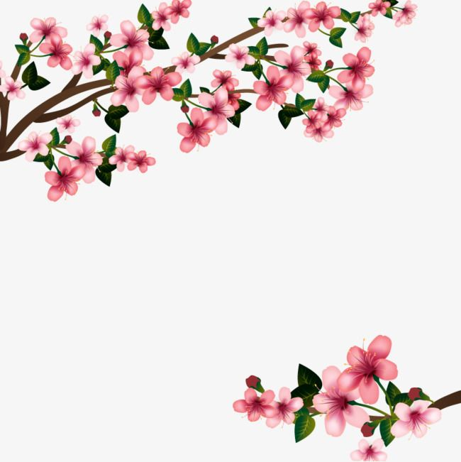 Vector de flor de cerejeira., HD, Gráfico De Vetor, Japanese Cherry Blossom  PNG e Vector | A | Pinterest | Cherry blossoms and Cherries - Cherry Blossom PNG HD