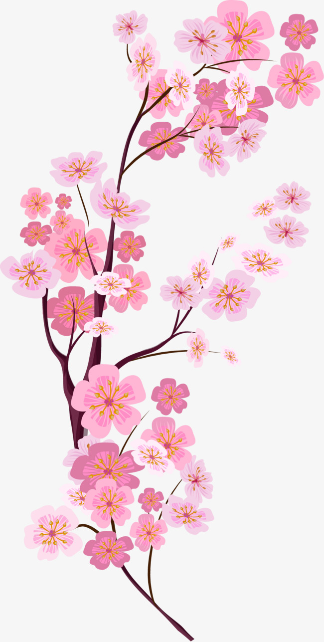 vector painted pink cherry blossoms, Vector, Hand Painted, Pink Cherry  Blossoms PNG and - Cherry Blossom PNG HD