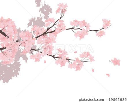 cherry blossom, cherry tree, sakura 19865686 - Cherry Blossom Tree PNG HD