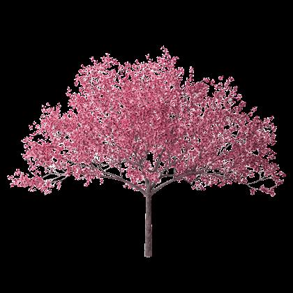 Cherry-Blossom-Tree-28-HD-Wallpaper.jpg - Cherry Blossom Tree PNG HD