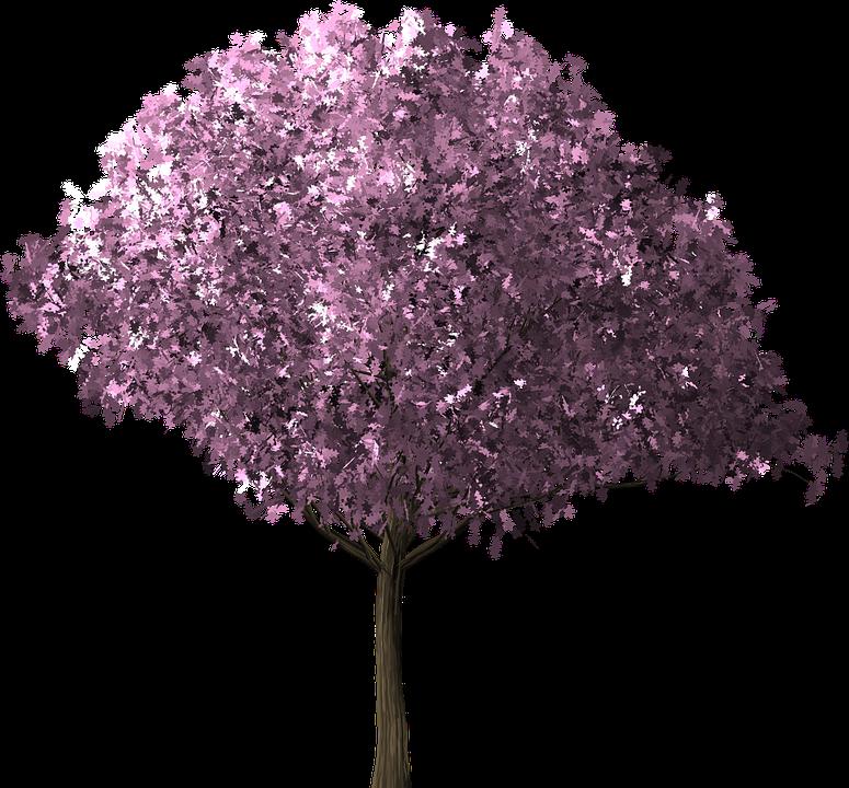cherry blossom tree cherry blossom tree scrapbook - Cherry Blossom Tree PNG HD