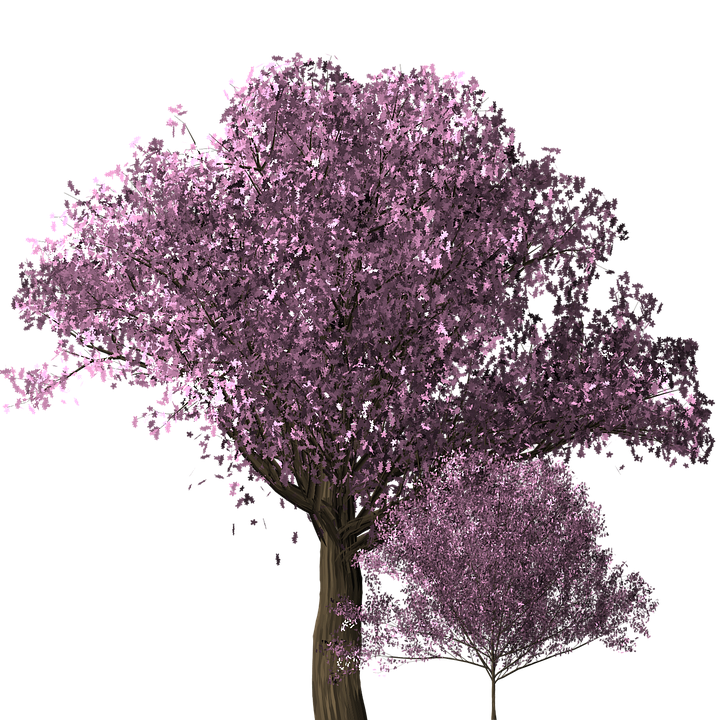 cherry blossom tree cherry blossom trees scrapbook - Cherry Blossom Tree PNG HD