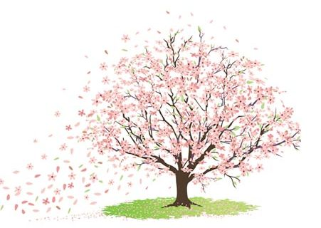CHERRY BLOSSOM TREE SKETCH - | Tattoo Ideas | Pinterest | Tree sketches, Blossom  trees and Sketches - Cherry Blossom Tree PNG HD