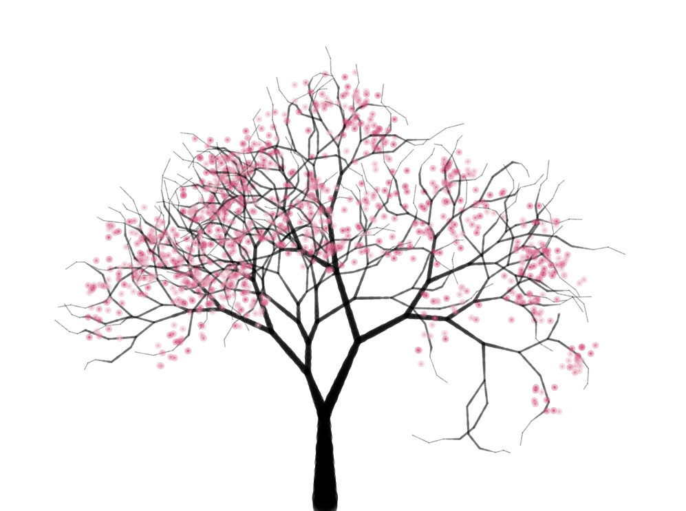 Cherry Tree - Cherry Blossom Tree PNG HD