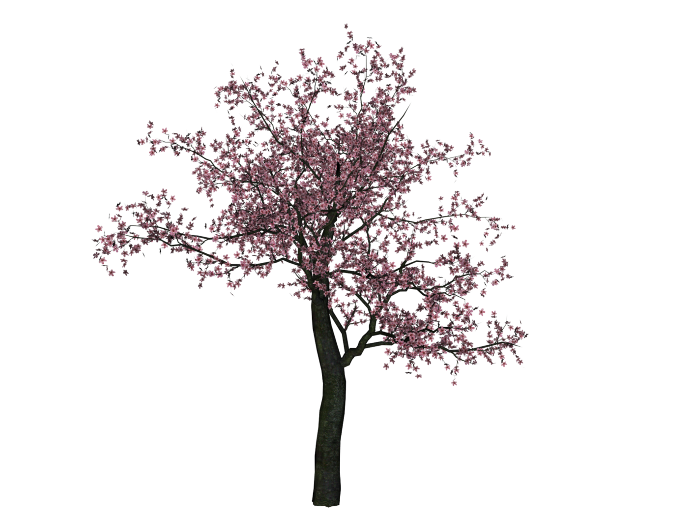 Cherry Tree PNG Image - Cherry Blossom Tree PNG HD