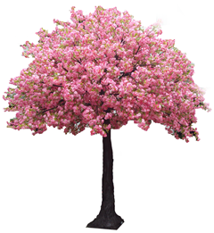 Pink Cherry Blossom Tree - Cherry Blossom Tree PNG HD