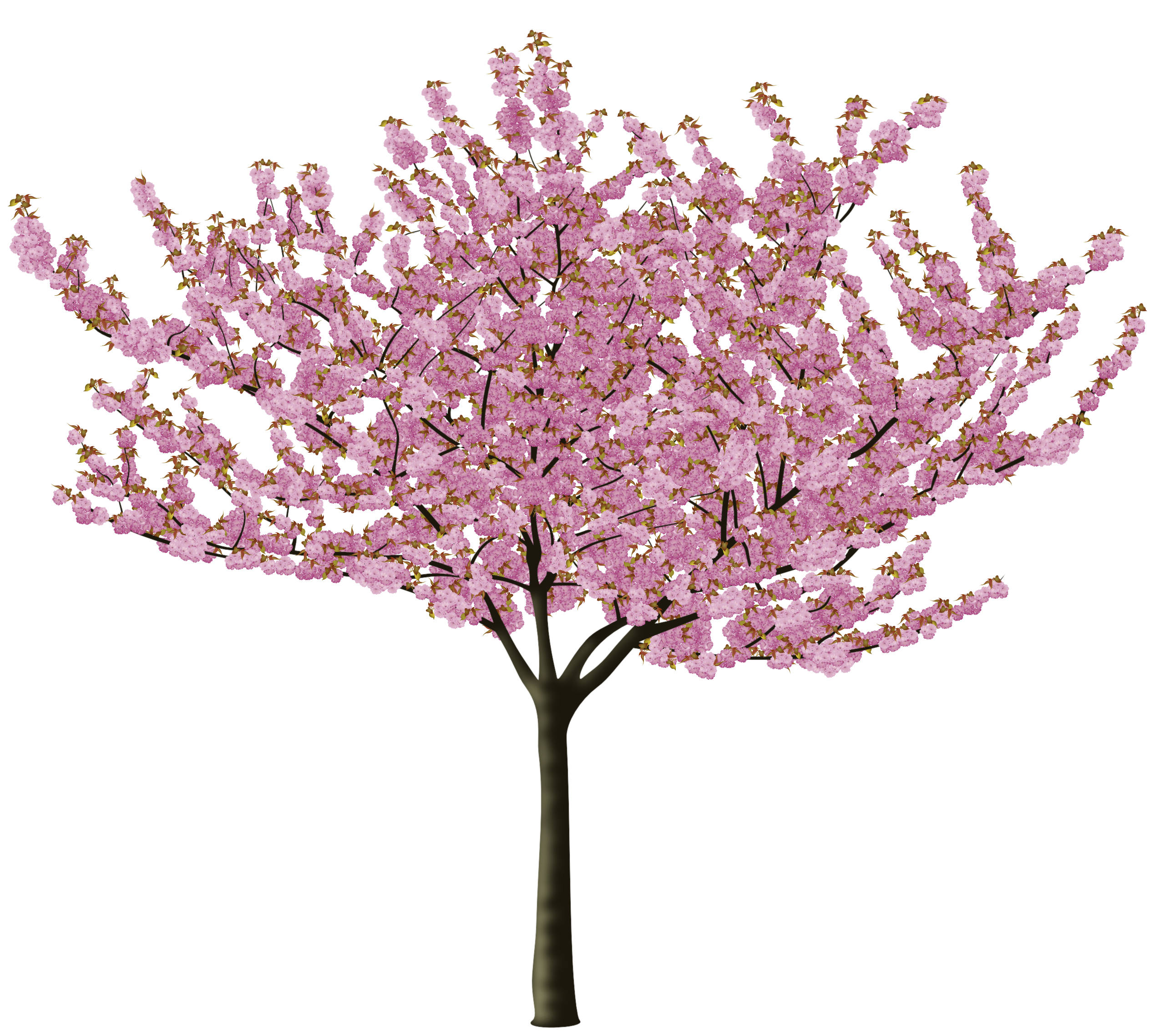 post-28172-0-77813900-1460903564_thumb.png - Cherry Blossom Tree PNG HD