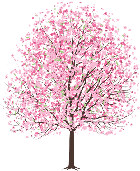 the cherry blossom tree - Cherry Blossom Tree PNG HD