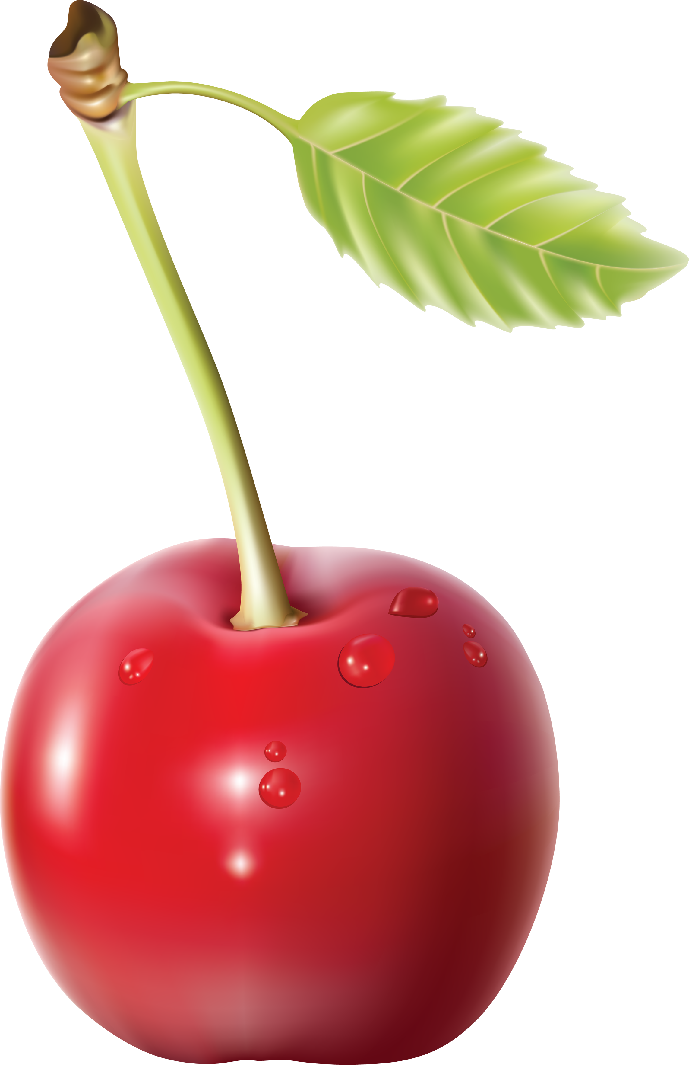 Cherry PNG - 26335