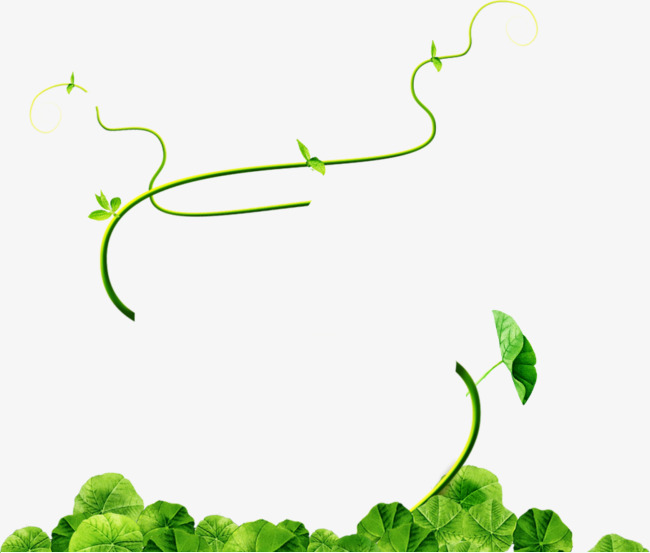 Thin strips of green vines, Green, Vine, Thin Strips Vines PNG and PSD - Cipo PNG