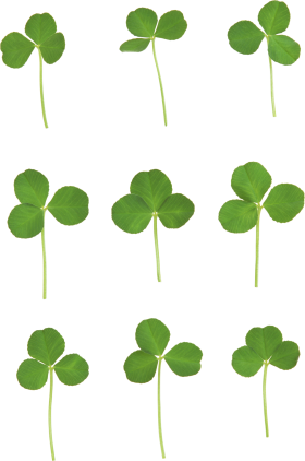Clover PNG - 16165