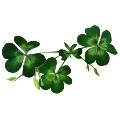 Clover PNG - 16172