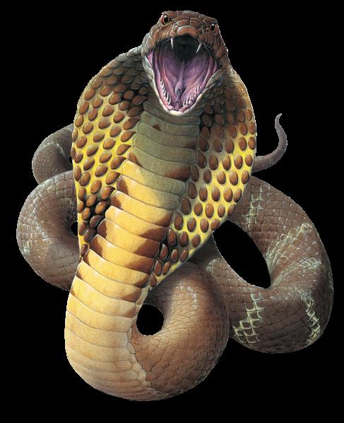 Cobra Snake PNG File - Snake PNG