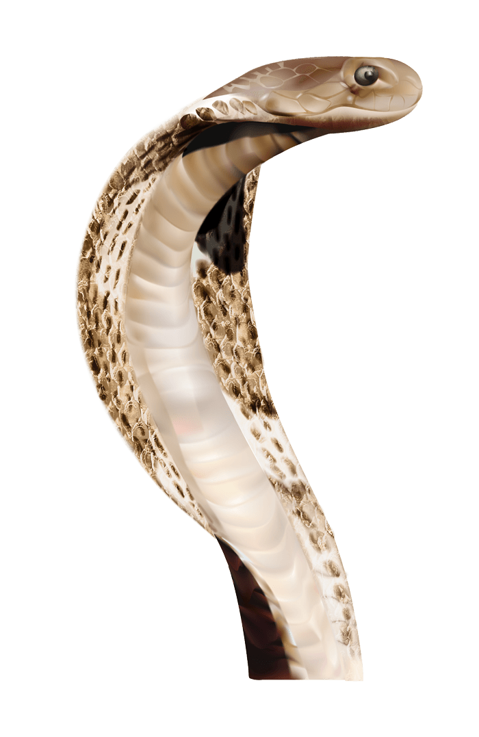 Anaconda PNG File - Anaconda PNG - Cobra Snake PNG HD
