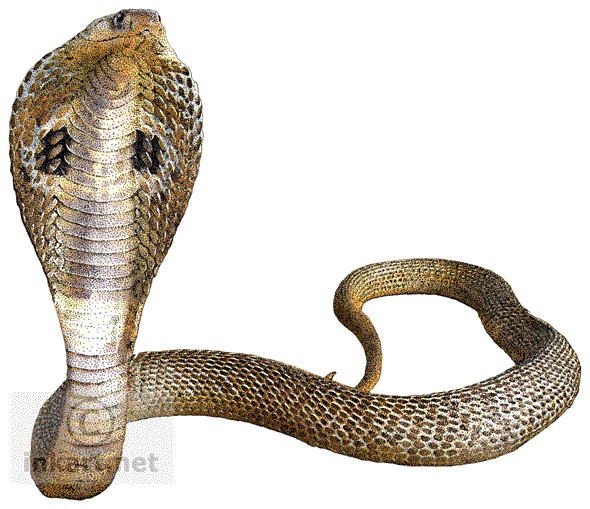 Cobra Snake Transparent Background - Cobra Snake PNG HD