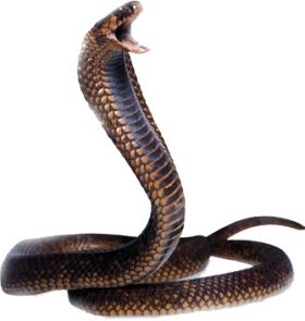 Snake PNG - 1065