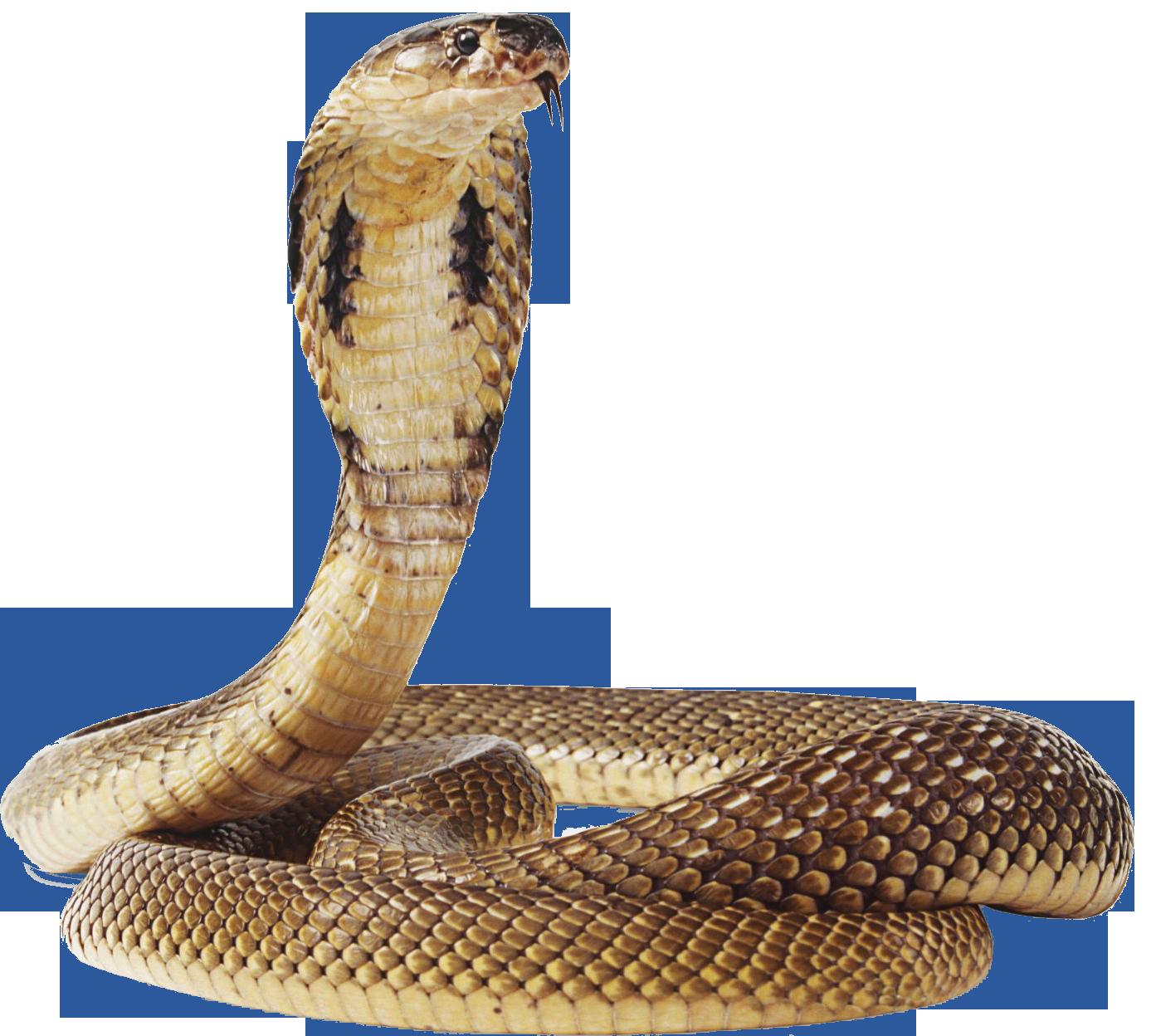Cobra Snake PNG Transparent Image - Snake PNG