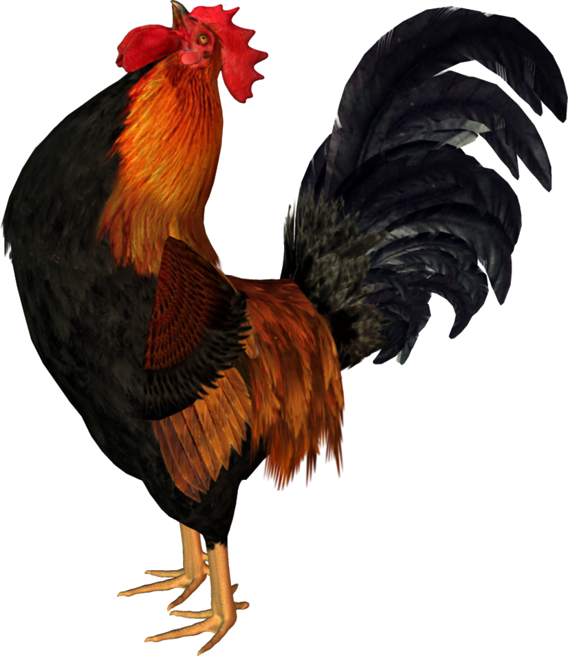 Cock PNG - Cock HD PNG