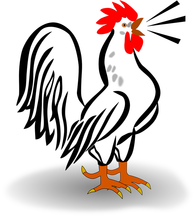 Rooster, Cark, Crow, Animal, Bird, Cock, Farm, Sound - Cock HD PNG