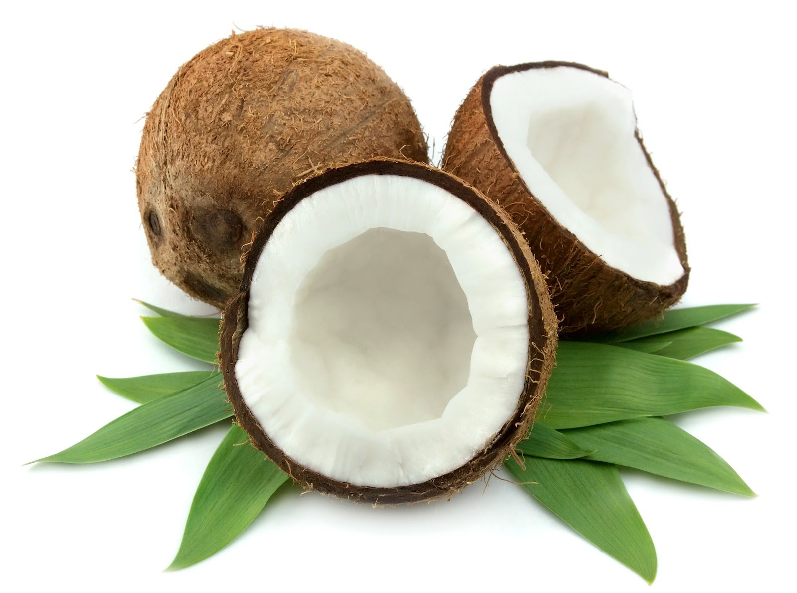 Coconut HD PNG - 93834