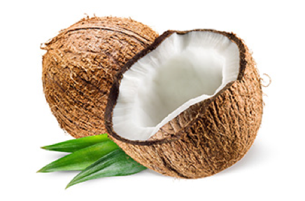 Coconut HD PNG - 93826