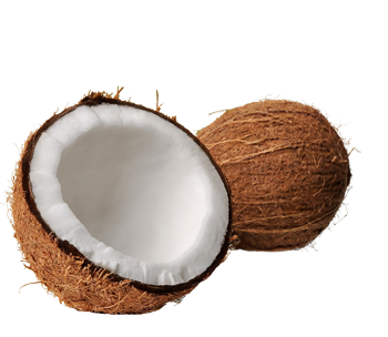 Coconut HD PNG - 93824