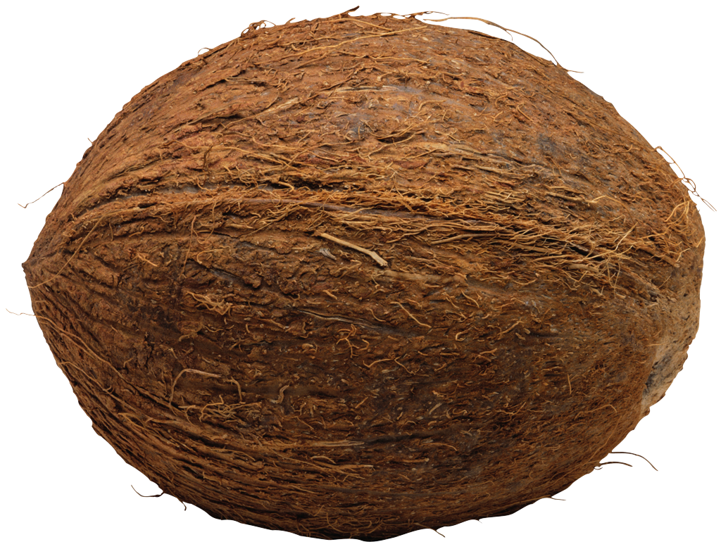Coconut HD PNG - 93827