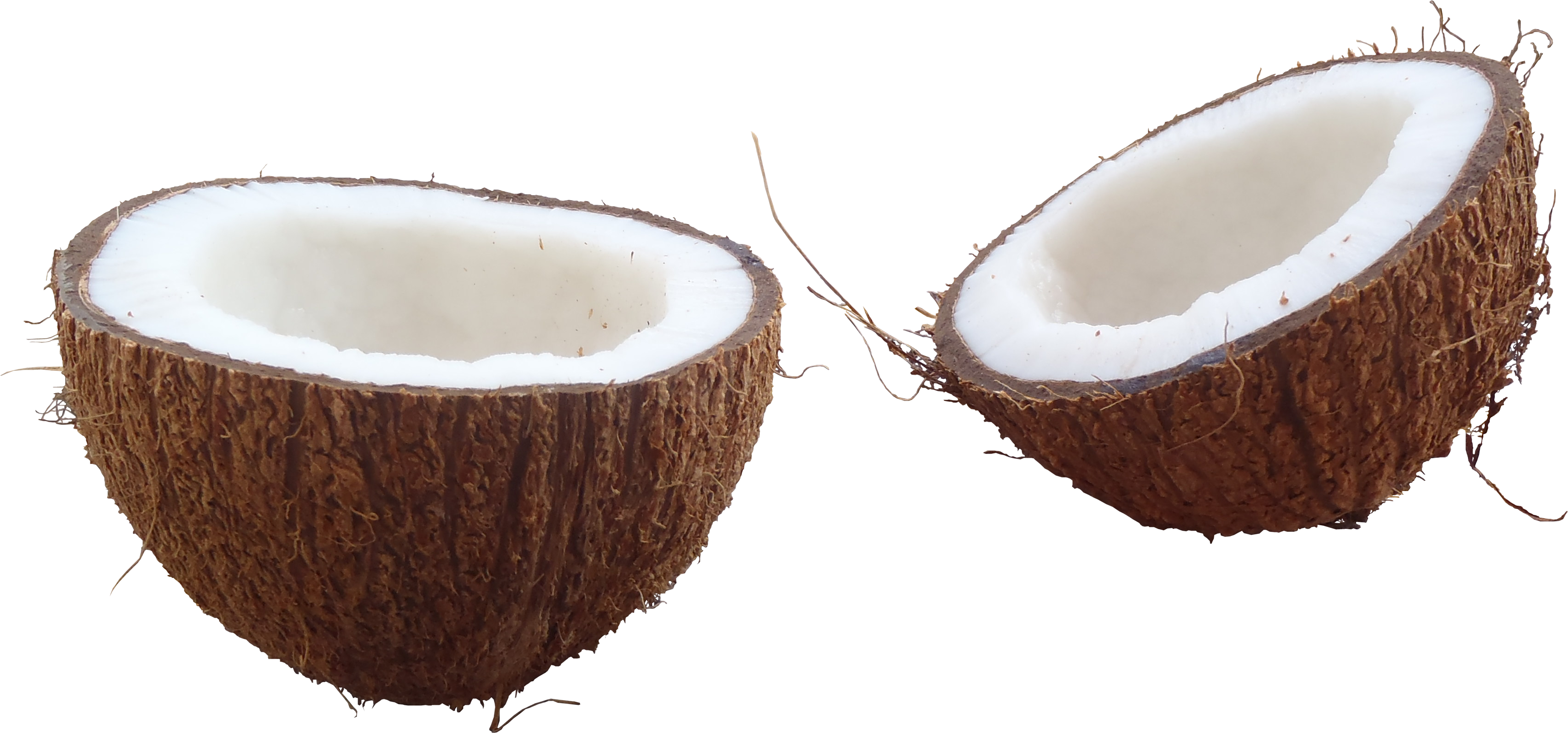 Coconut HD PNG - 93821