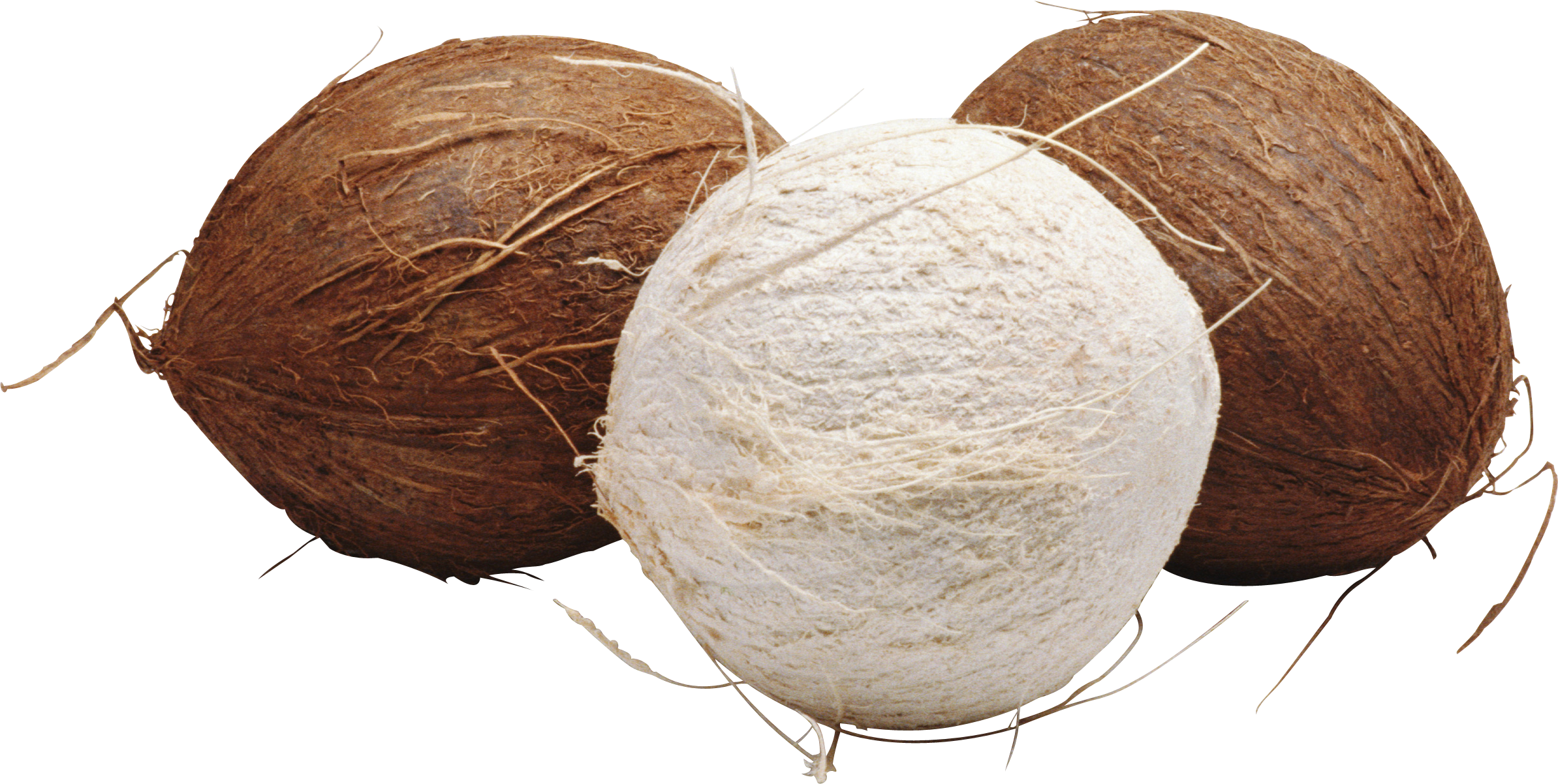 Coconut HD PNG - 93832
