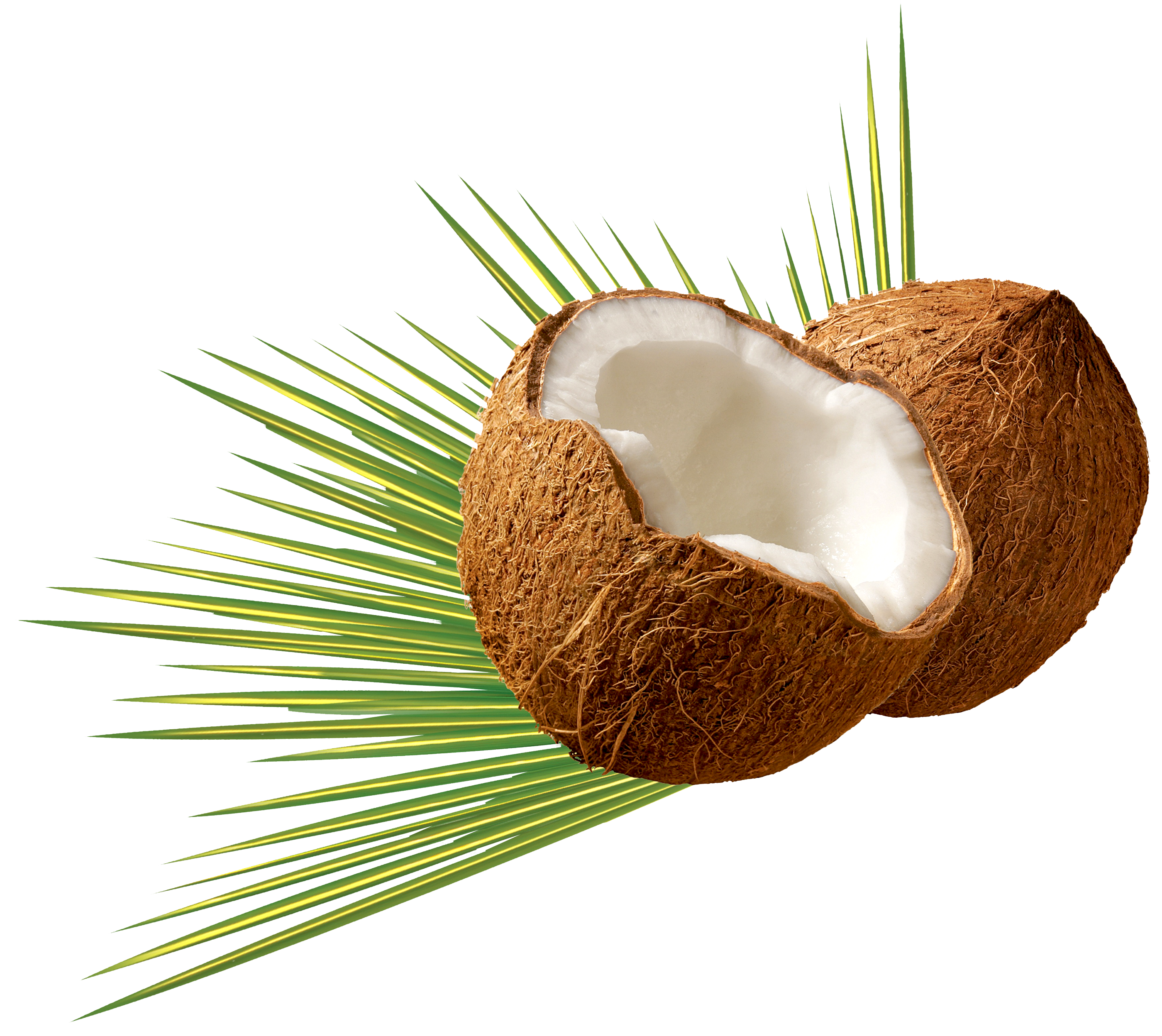 Coconut HD PNG - 93825