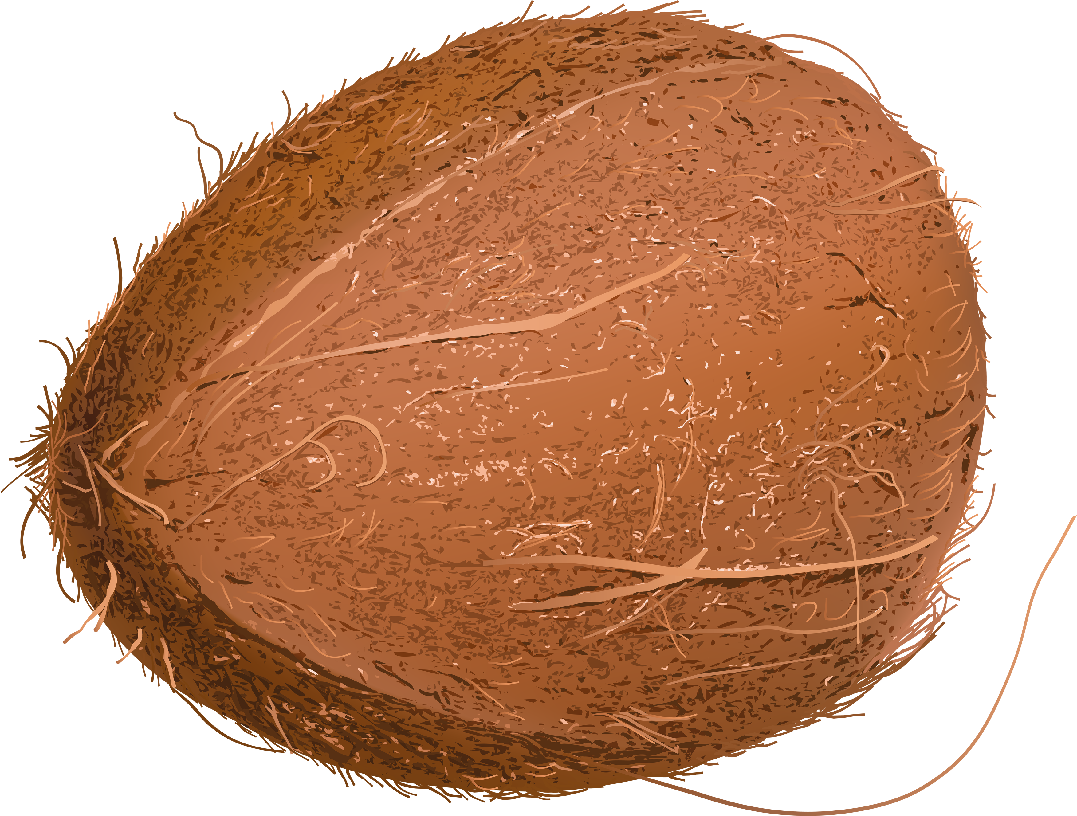 Coconut PNG image - Coconut HD PNG