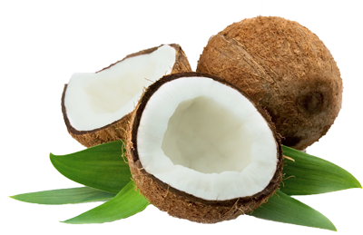 Coconut HD PNG - 93820