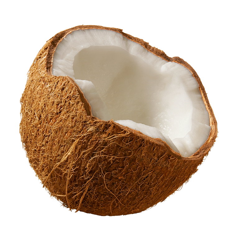 Coconut HD PNG - 93822