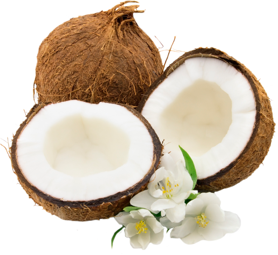 Coconut HD PNG