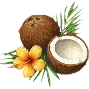 Coconut HD PNG - 93829