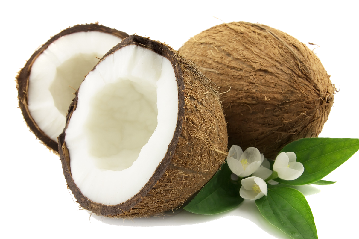Coconut HD PNG - 93823