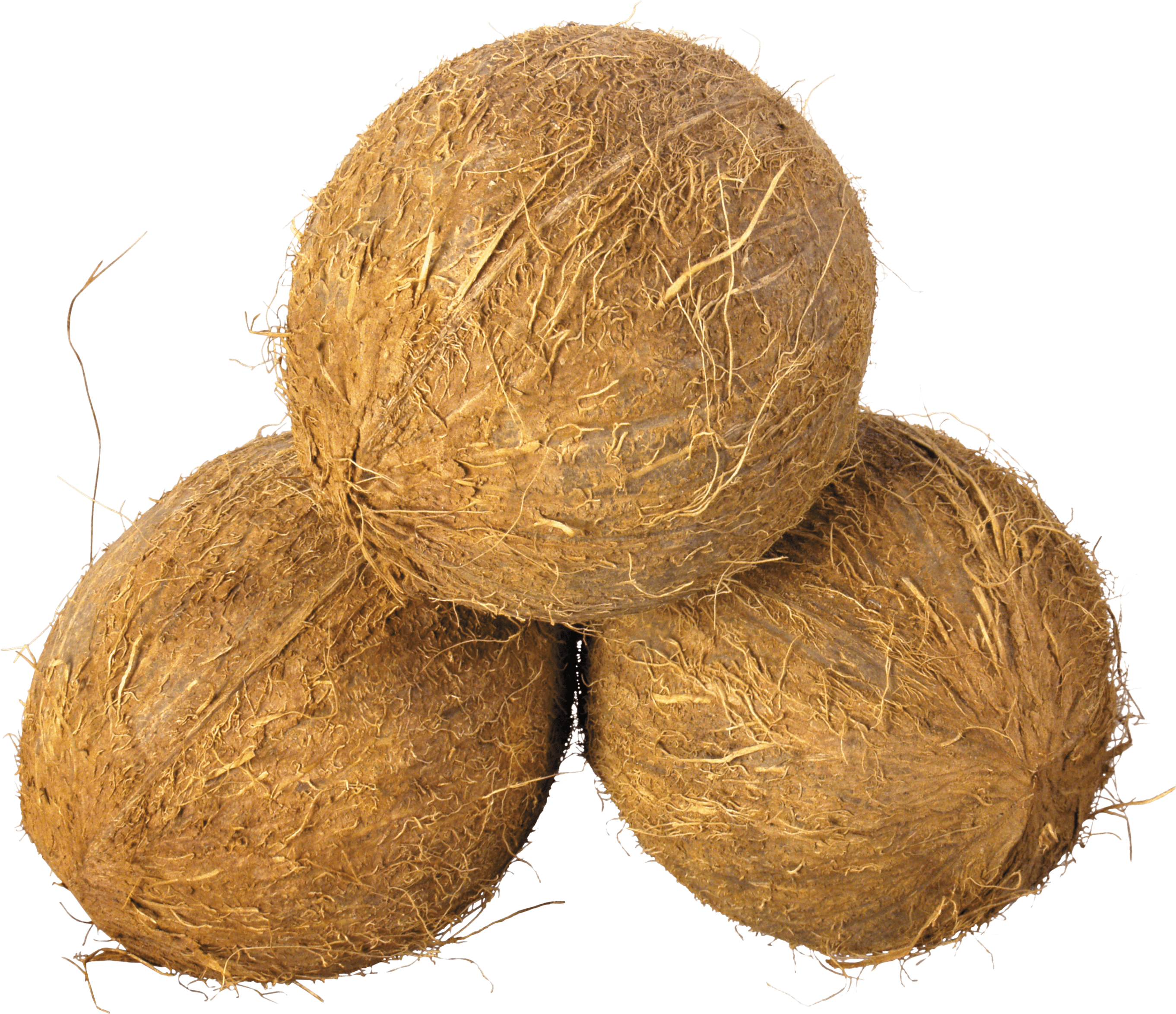 Coconut HD PNG - 93831