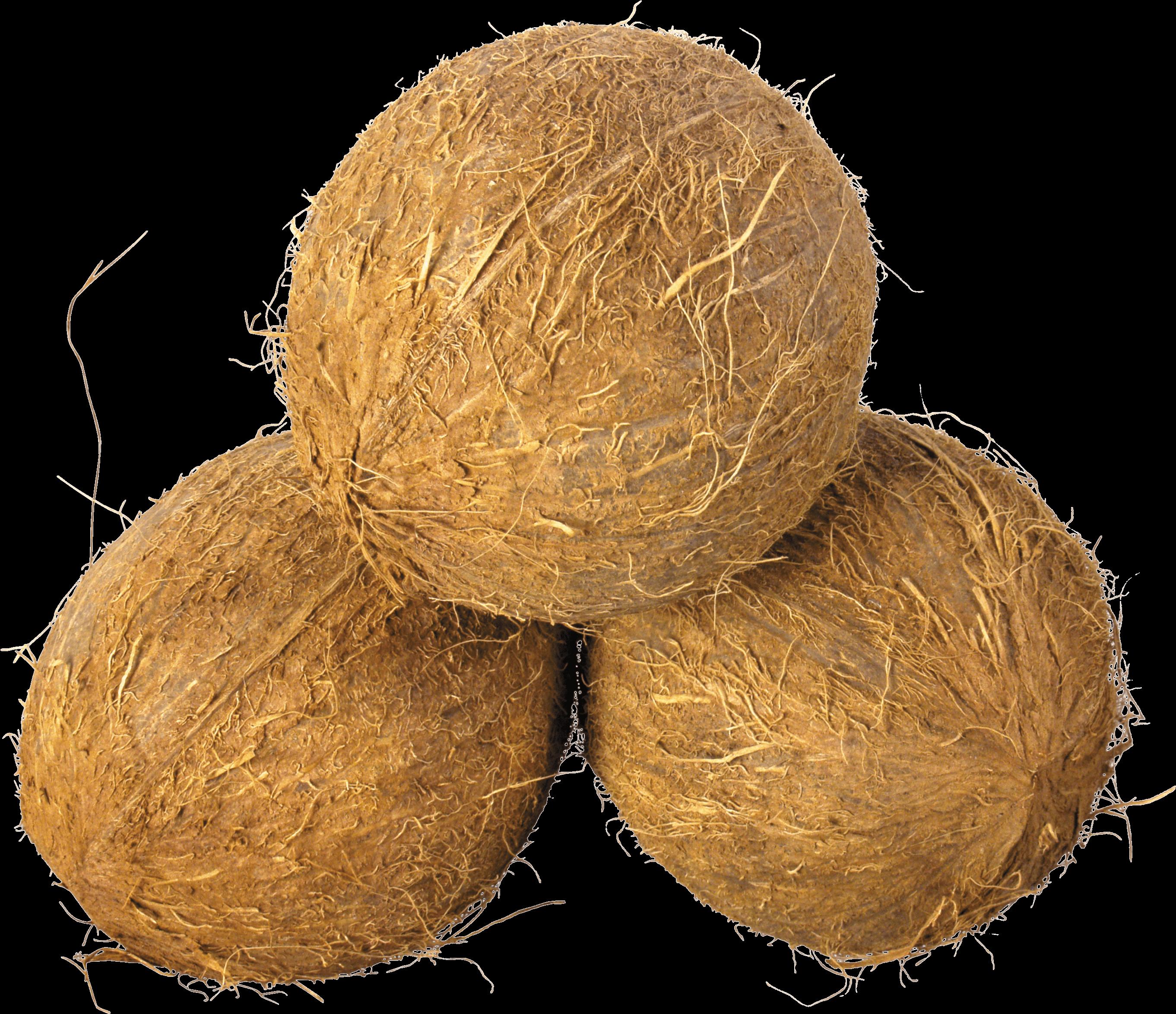 Coconut Trio - Coconut HD PNG