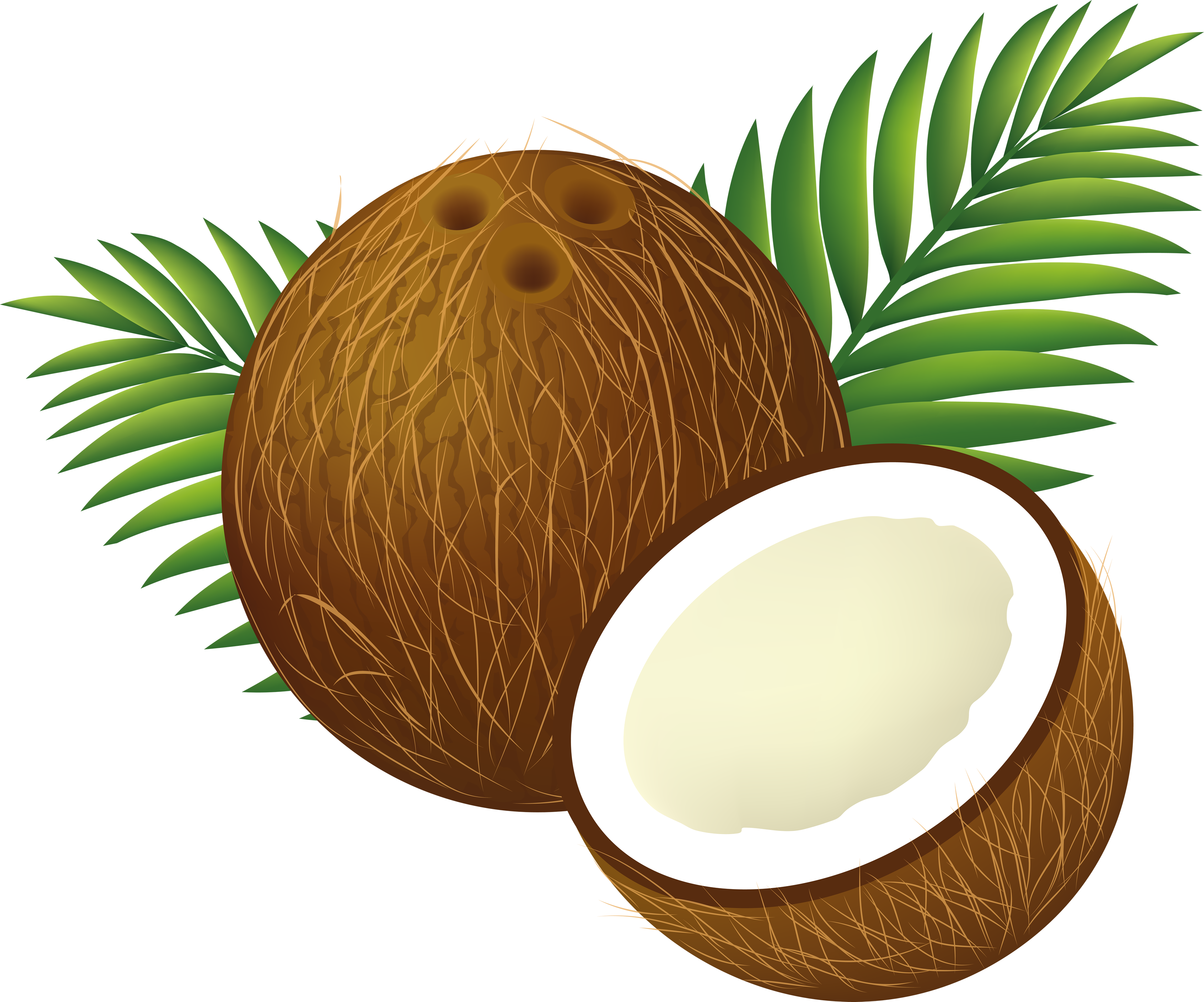File:Coconut Clipart Cartoon.png - Coconut HD PNG