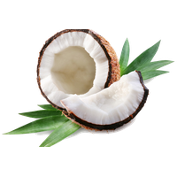 Coconut PNG - 26625
