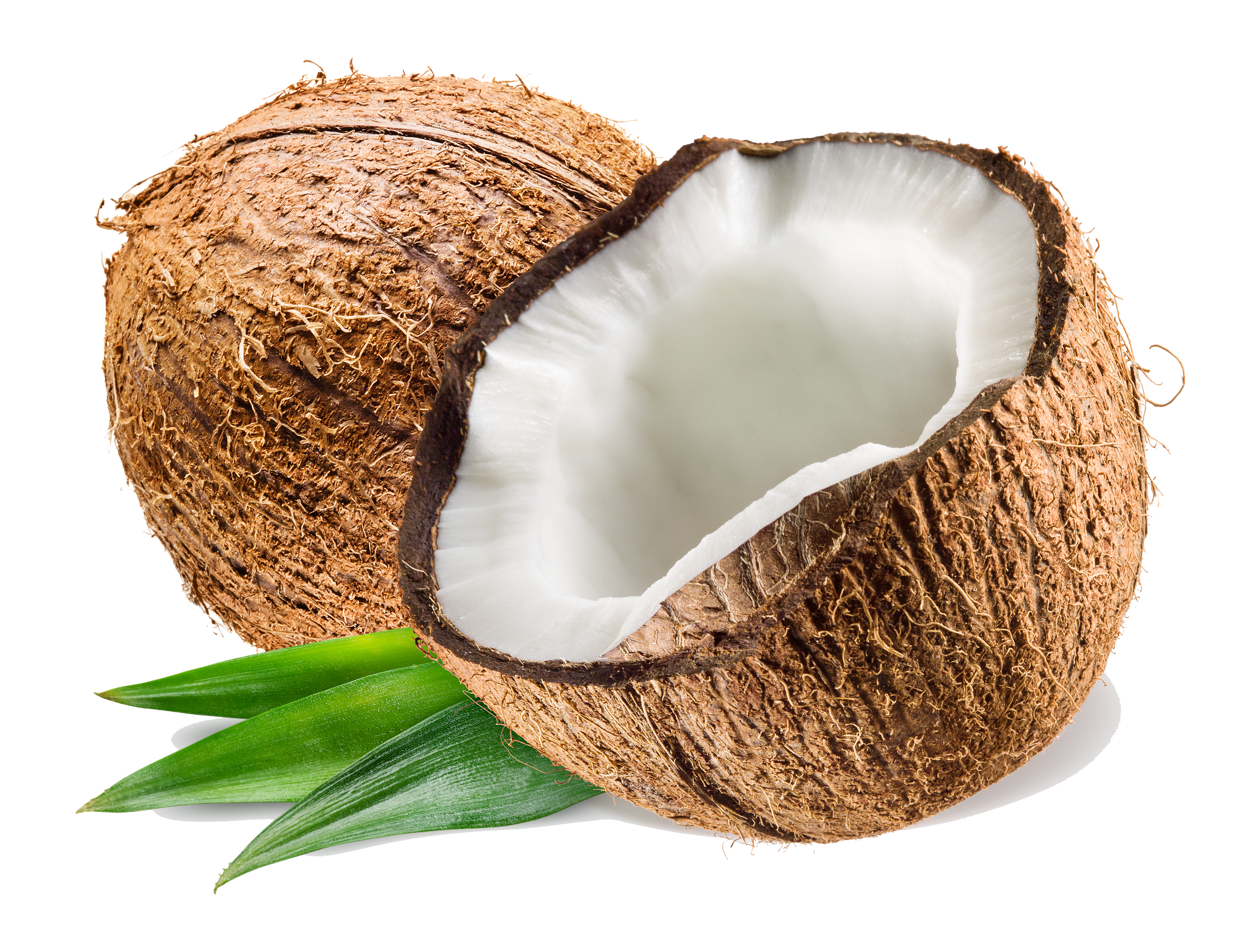 coconut.png PlusPng.com  - Coconut PNG