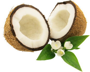 Coconut PNG image - Coconut PNG